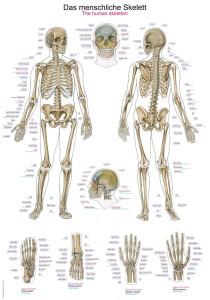 Plansze Anatomiczne Sklep Dla Fizjoterapeutów Reha Plus